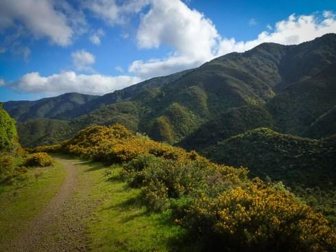 Rimutaka Cycle Trail landscape