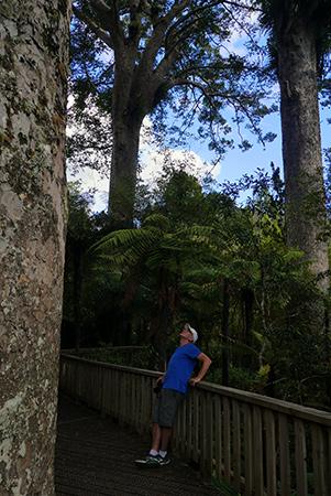 Kauri Cove