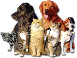 1296946662-cats_n_dogs