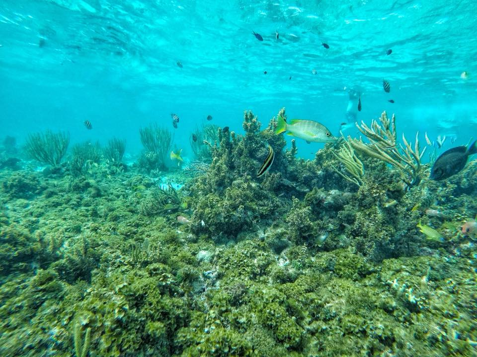 Tropical Fish Swimming On A Coral Reef In The Cayman Islands
