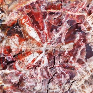 Petrified Tree Petrified Forest National Park