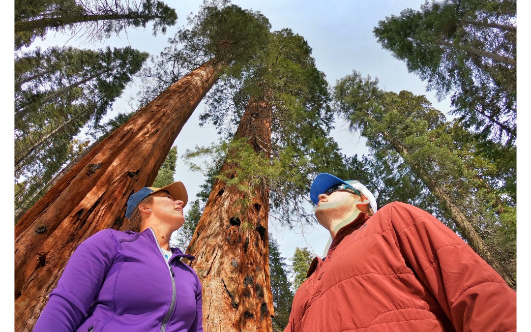 Searching For Sequoias: Where To See Big Trees In Yosemite National Park