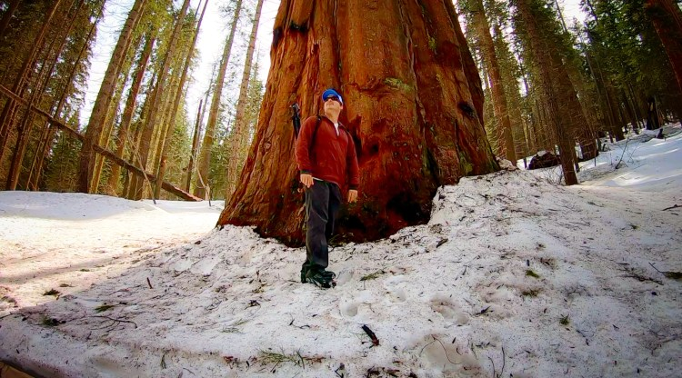 Hiking Trail To Giant Sequoia Trees, Yosemite National Park