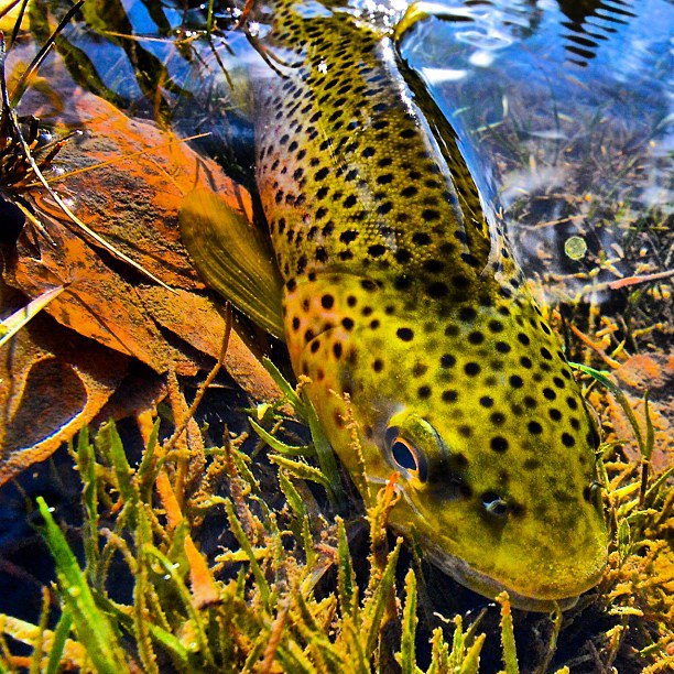Credit: Faceless Fly Fishing Media