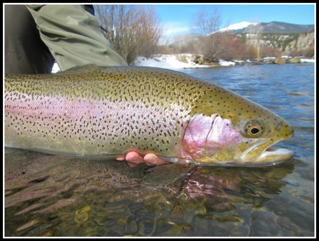 Colorado Trout Hunters