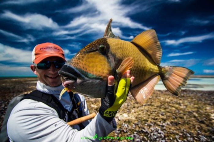 Peter McLeod Triggerfish