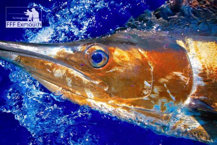FFF Exmouth eyes sailfish