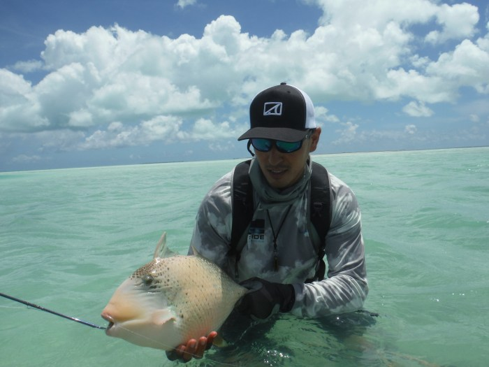 Jesse Cheape Triggerfish