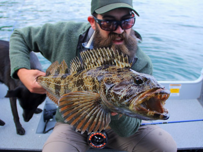 Lucas Young lingcod Sage