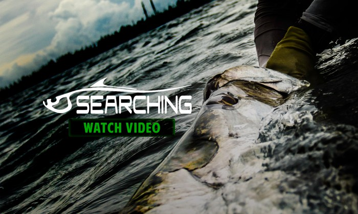 C1 Films Searching