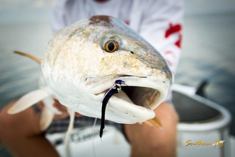Louisiana redfish.jpg