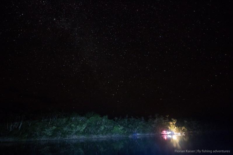 untamed amazon night