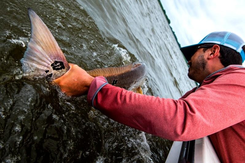 redfish release.jpg