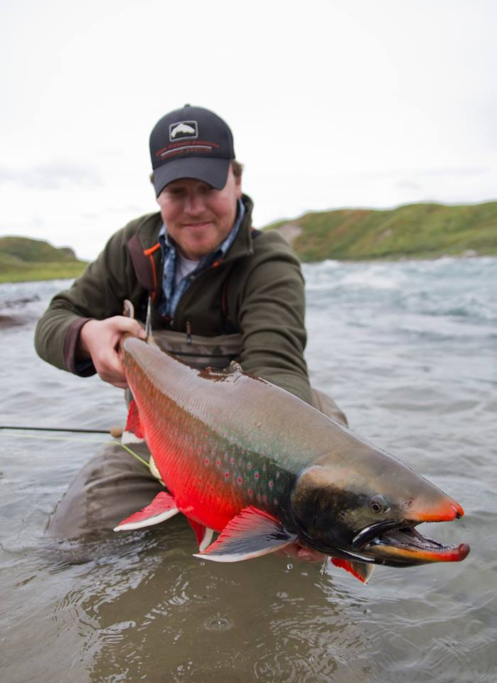 The Arctic char