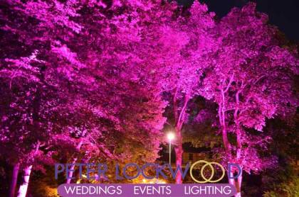 pink-garden-tree-lighting