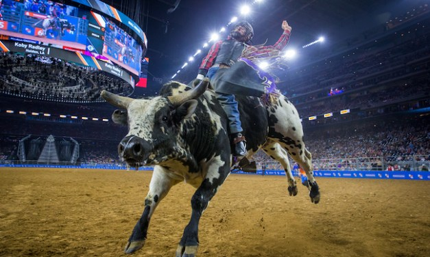 Houston's Rodeo: Data in the Dirt