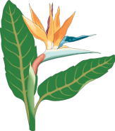 clipbird-of-paradise-bloom