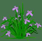 clipiris