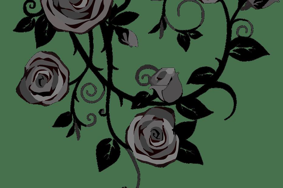roses, flowers, gray-303548.jpg