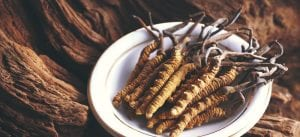 cordyceps_fungus_benefits