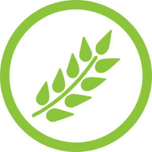 best_mushroom_supplements