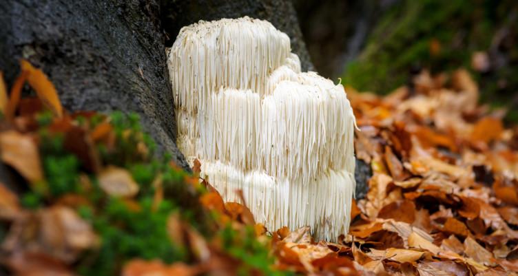 lions_mane_mushroom_supplement_capsules