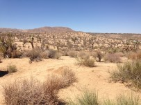 The desert of Joshua Tree
