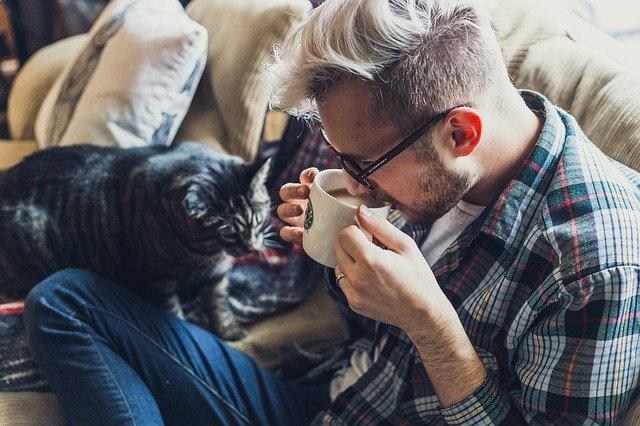 samenwonen met een kat