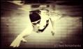 Kraulschwimmen, Kraul Schwimmen, Kraultechnik, Freestyle Swimming, Kraul Streckung und Armanstellung