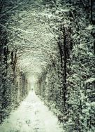 Tunnel of love during winter