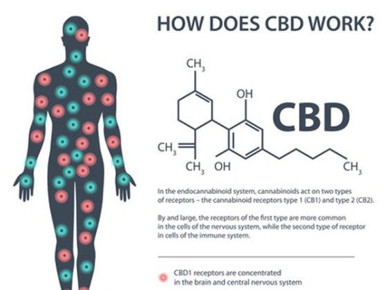 ECS and CBD Chart