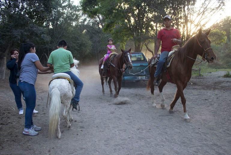 Caballos en Los Colomos. Foto: Alejandra Leyva