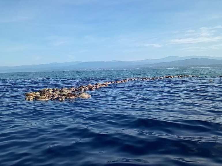 Tortugas muertas en Oaxaca, en el mar