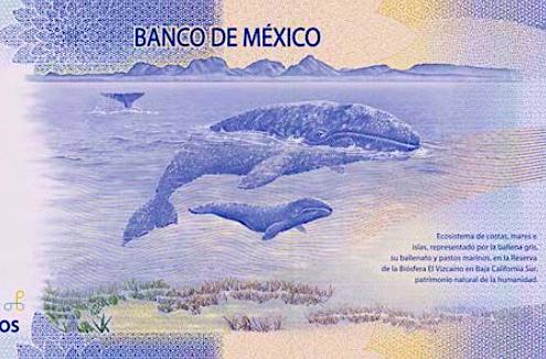 Ballena en nuevo billete de 500 pesos México