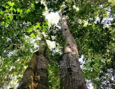 Bosques. Foto: Michelle Soto