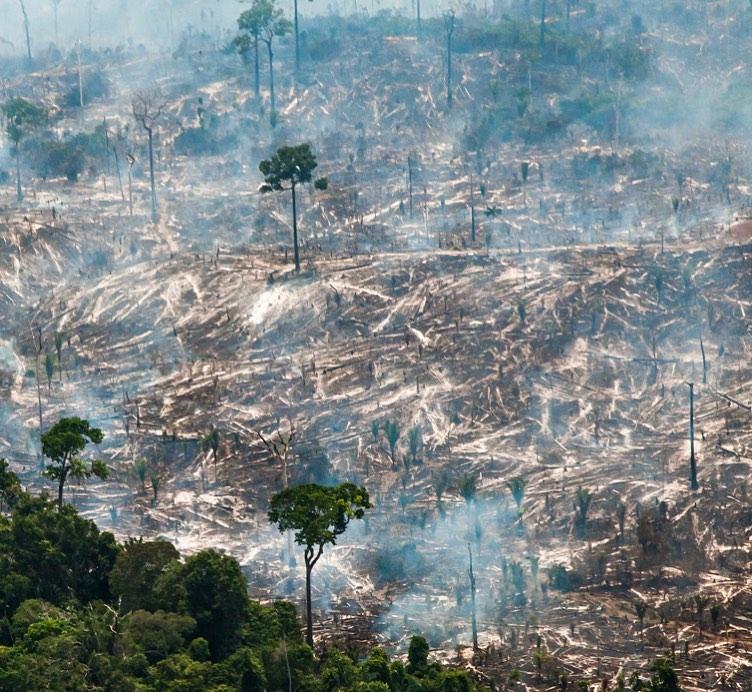 Devastación por incendios en el Amazonas. Foto: Araquém Alcântara