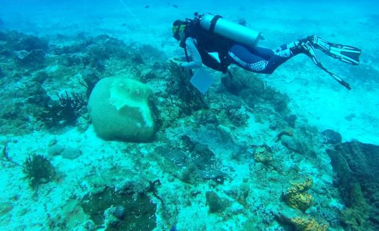 Parque Nacional Arrecifes Cozumel. Foto: Conanp