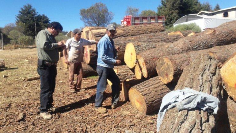 Inspectores de Profepa en un decomiso de madera. Foto: Profepa