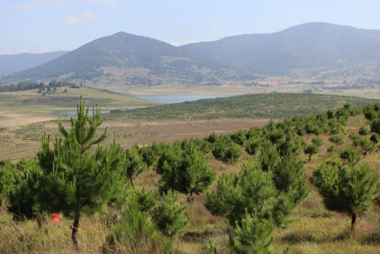 Reforestación. Foto: Conafor