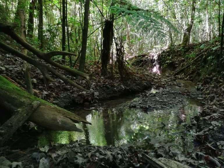 La cañada del Ojo de Agua del Cuervo, como todos los bosques mesófilos de montaña, es una fuente de recarga de agua. Allí nacen los ríos Talpa y Tomatlán. Foto: Agustín Castillo.