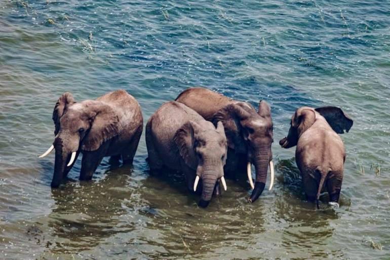 Elefantes del Parque Nacional Virunga