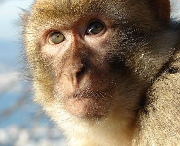 mono en india