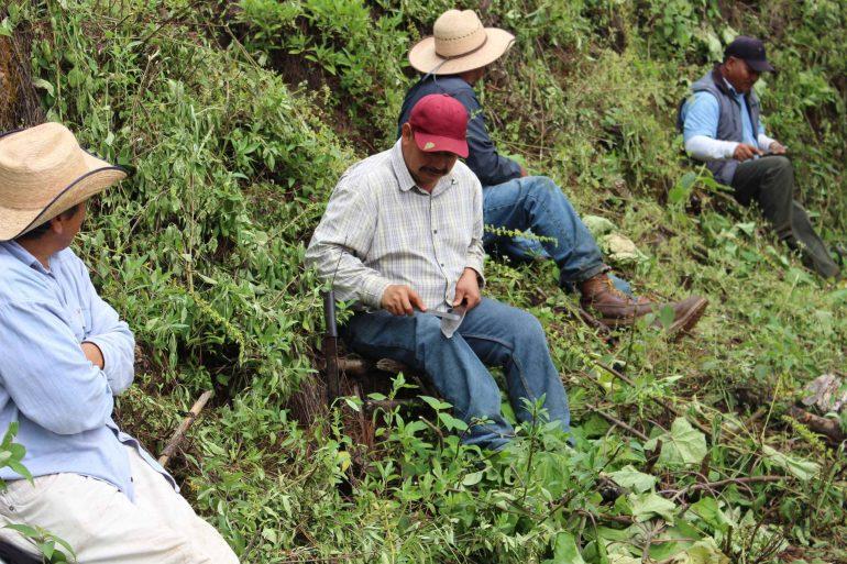 Los comuneros de Nuevo San Juan realizan faenas, trabajo para el bosque, sin recibir remuneración. Foto: María Eugenia Olvera/Polea A.C.