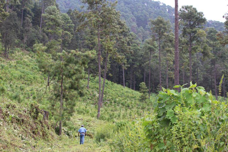 Zona de regeneración del bosque en Nuevo San Juan. Foto: María Eugenia Olvera/Polea A.C.