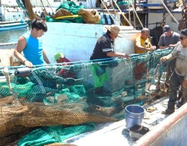Pescadores de camarón de Campeche usan nuevas redes para evitar la pesca incidental. Foto de la FAO