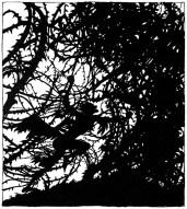 arthur rackham_the sleeping beauty_16_med
