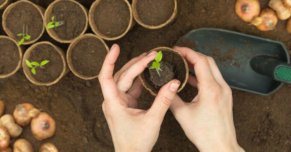 Resultado de imagen de huerto siembra