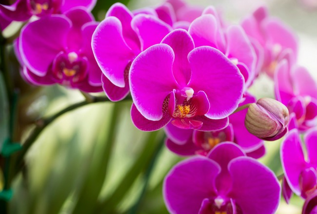 Image result for orquídea