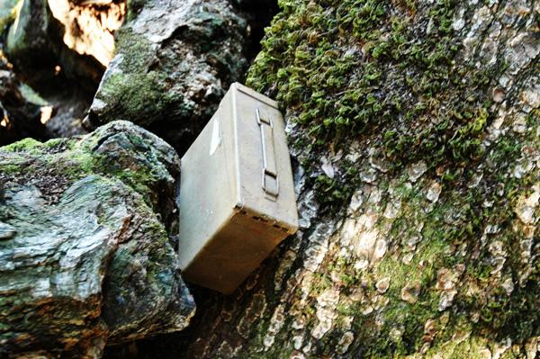 A cache hidden in the Los Tranceros Open State Preserve, found in a tree.