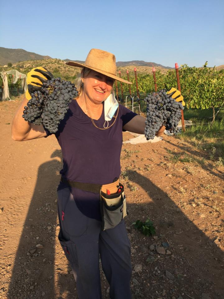 Luscious grape clusters